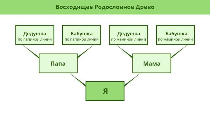 как сделать фамильное дерево в word