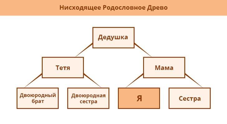 как сделать семейное древо в powerpoint