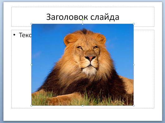 как сделать картинки одного размера в powerpoint